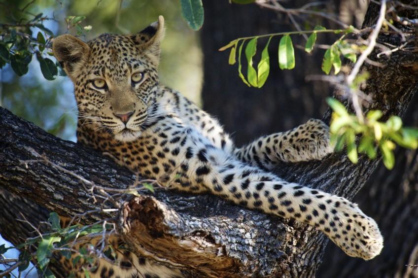 Botswana  Southern Africa
